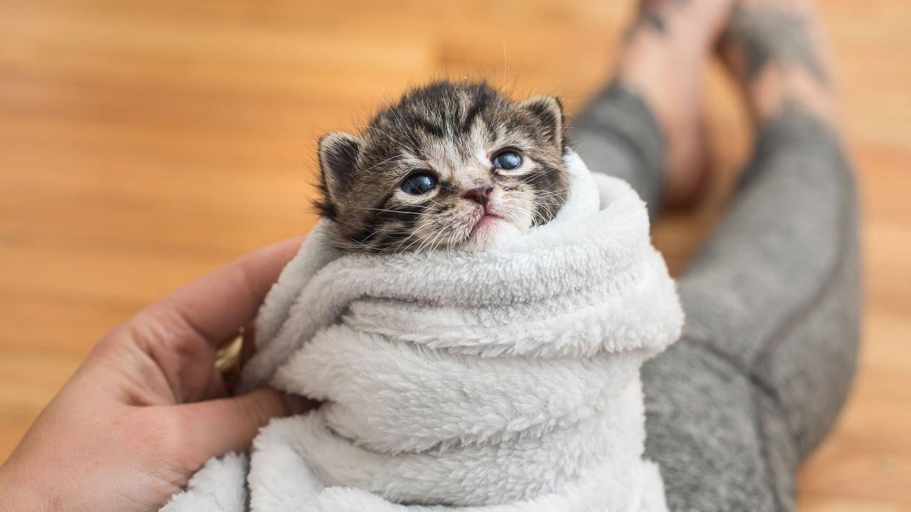 cuidame-refugio-perros-gatos-mascotas-gatito-bebe-recien-nacido-cuidados-puebla